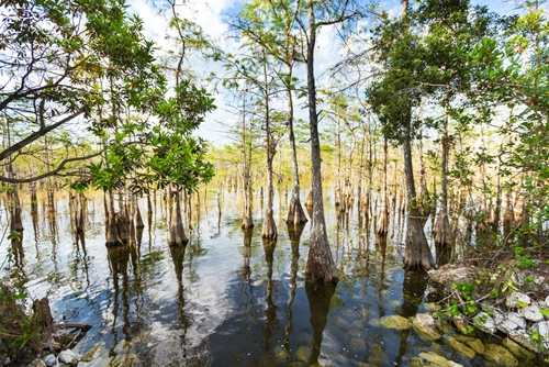 wetlands-will-be-mapped-to-help-preserve-two-animal-species_1445_612522_0_14098399_500-1.jpg